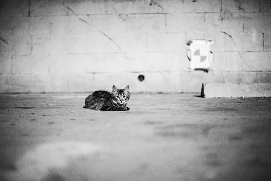 Cat_Gang (26 of 20)_r copy.jpg