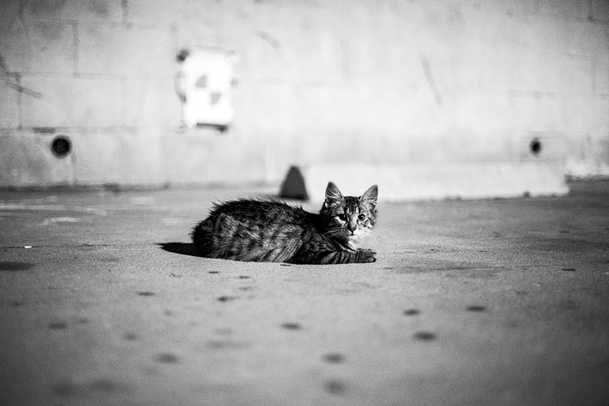 Cat_Gang (28 of 20)_r copy.jpg