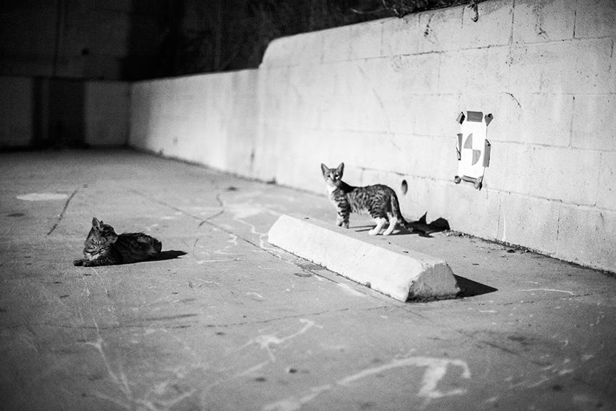 Cat_Gang (32 of 20)_r copy.jpg