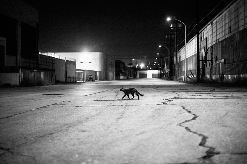 Cat_Gang (38 of 20)_r.jpg