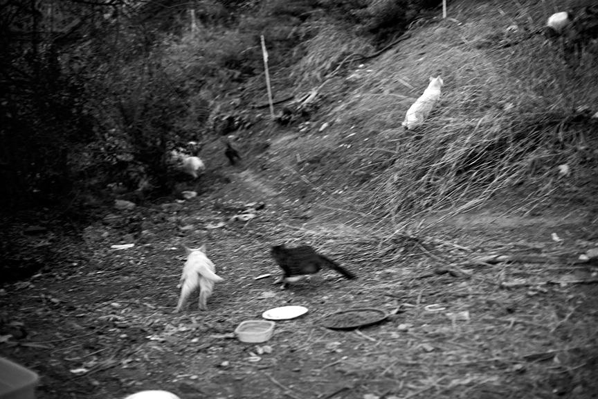 Cat_Gang-2776 copy.jpg