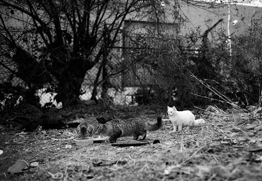 Cat_Gang-2802 copy.jpg