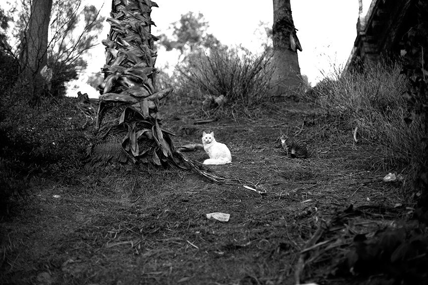 Cat_Gang-2860.jpg