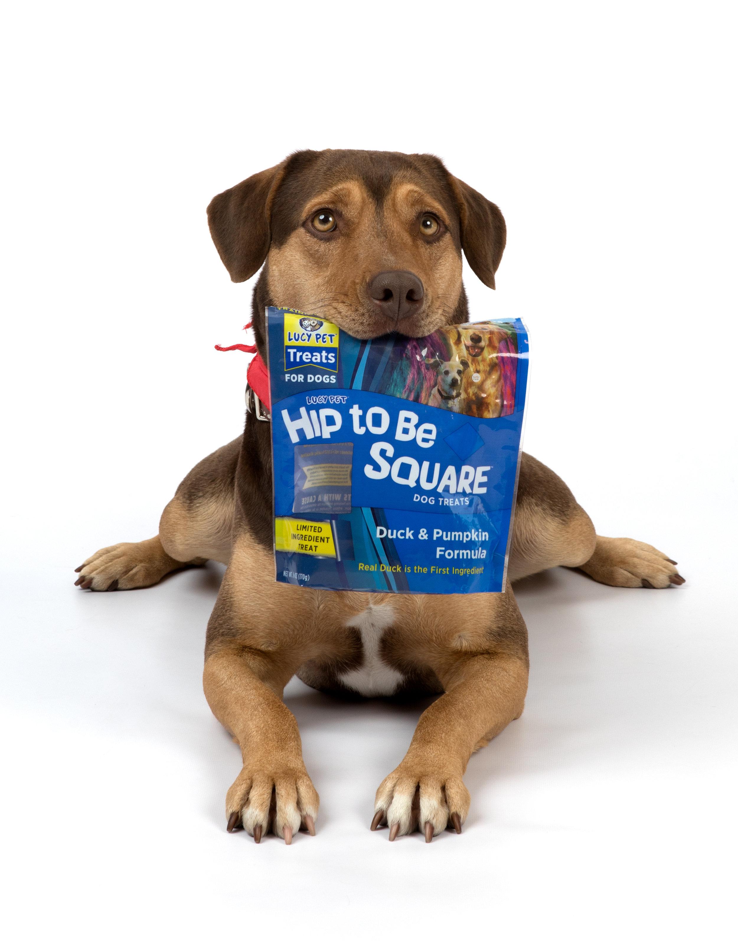 A Dogs Way_Press Junket_Danielle_Spires-1590.jpg