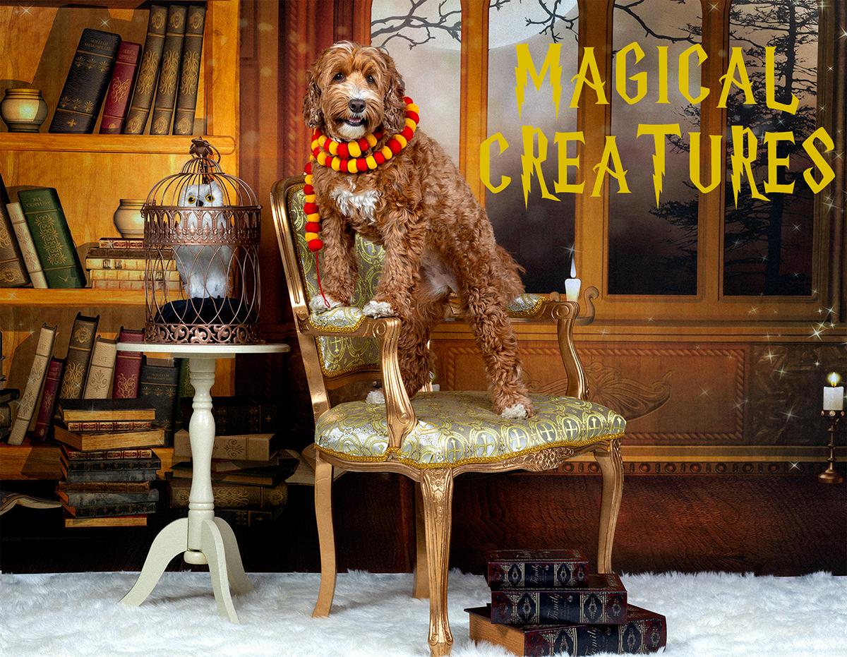 20190714_Pet Portraits_Danielle Spires-MAGICAL CREATURES_SML.jpg