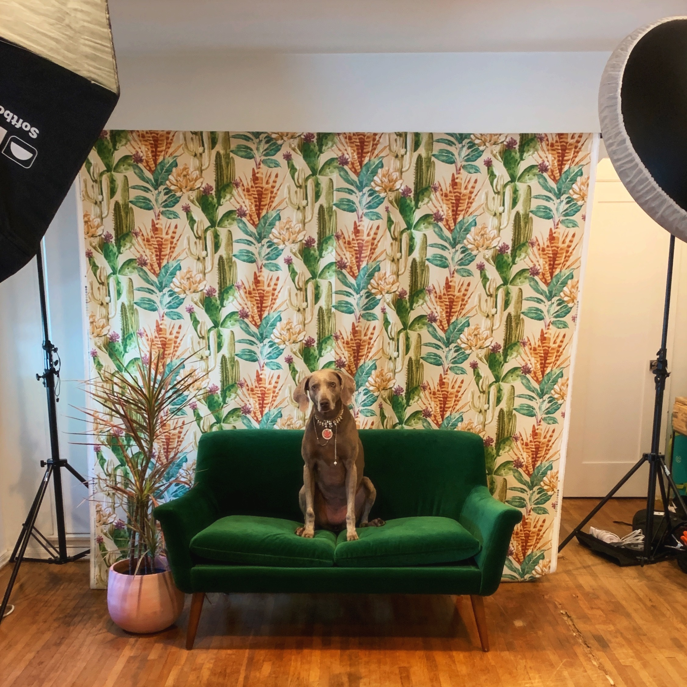IN-HOME/ CORPORATE PET PORTRAITS -