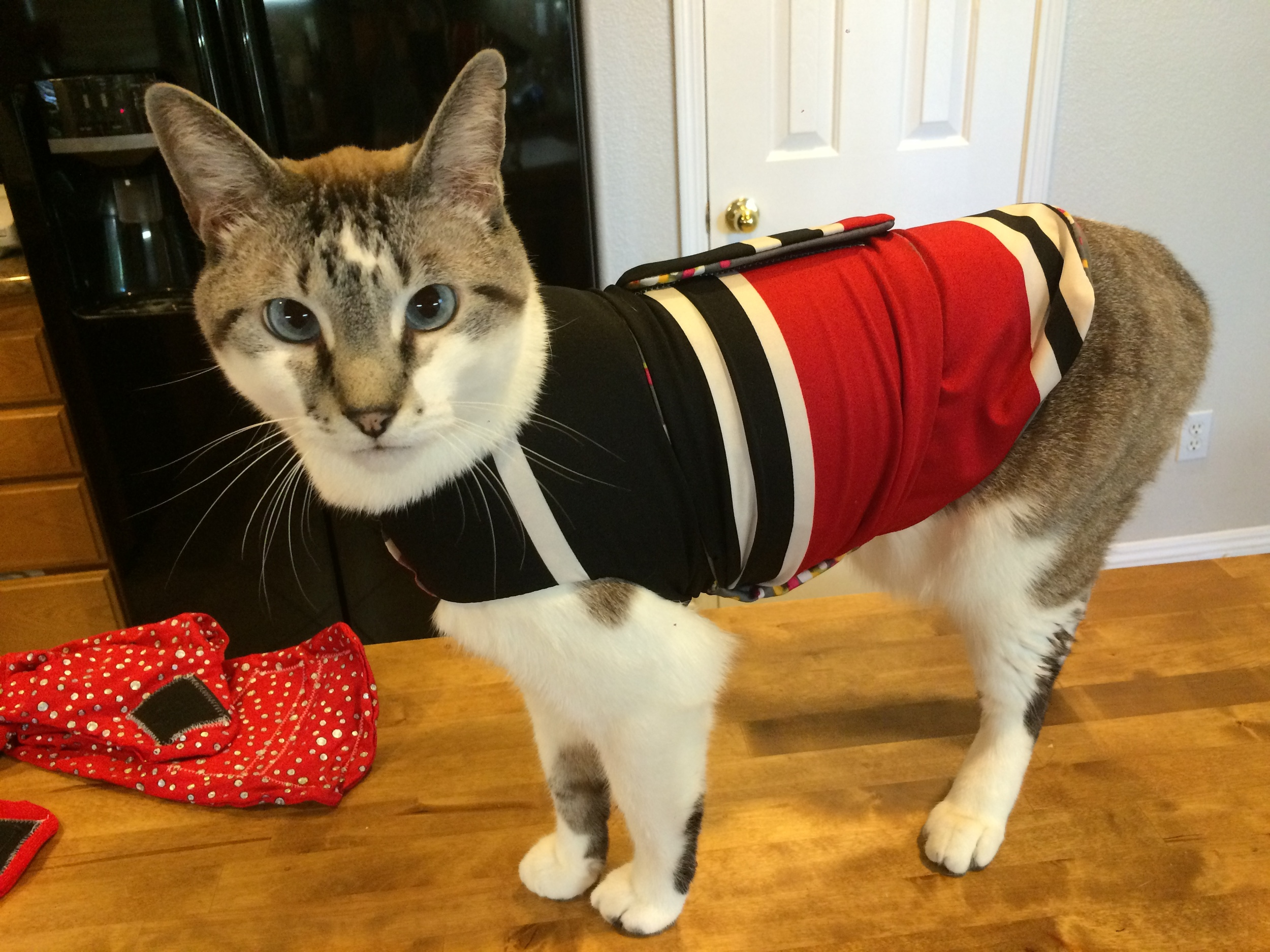 My husband says Milo looks like he's an Olympic athlete from Yemen and he's wearing his country's flag during the medal ceremony. I call this Milo's Yemen shirt.