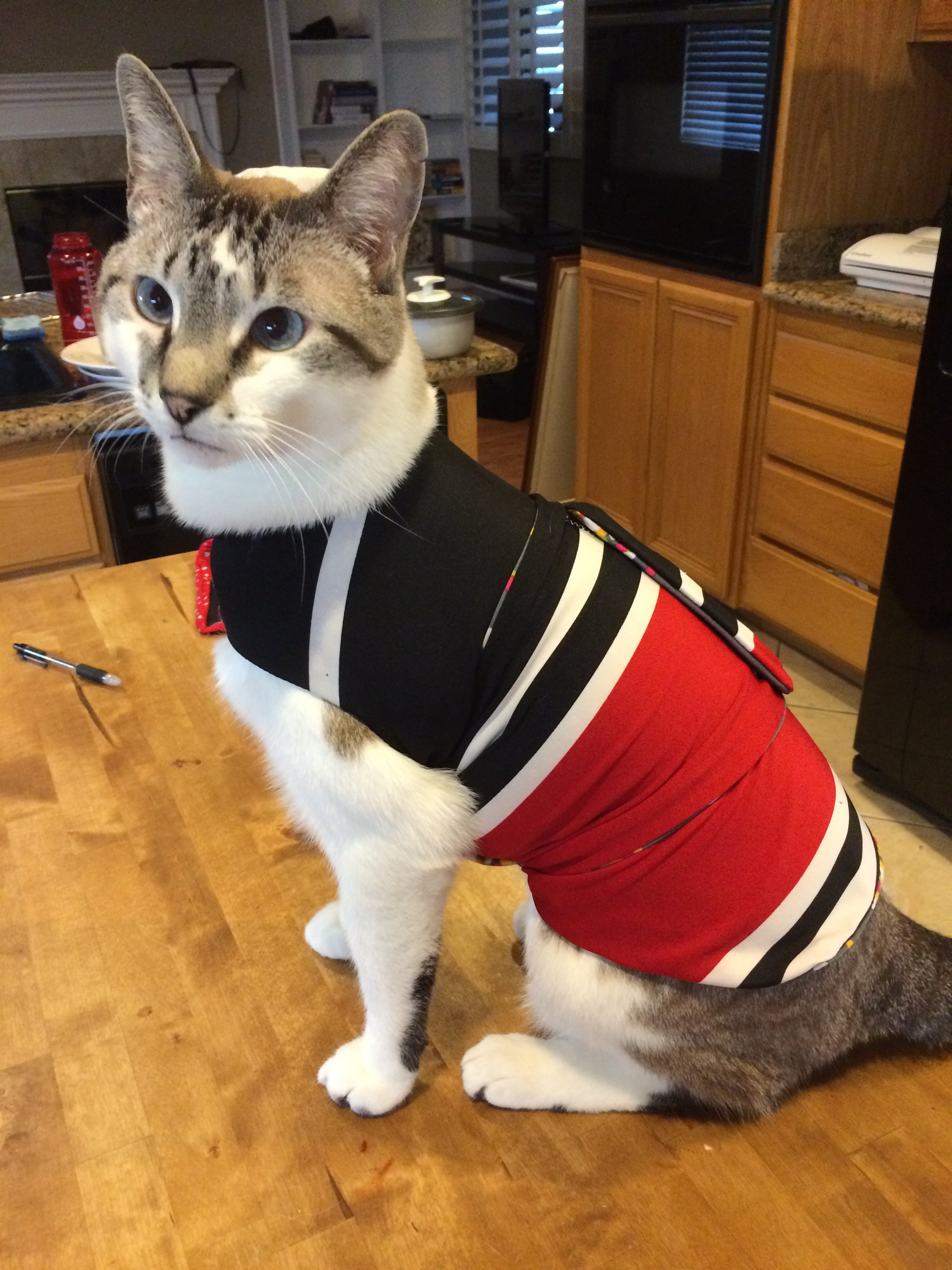 Milo in his red, black, and white thundershirt! Its the same material as my first skirt. I need to get a picture of us together all matchy matchy!