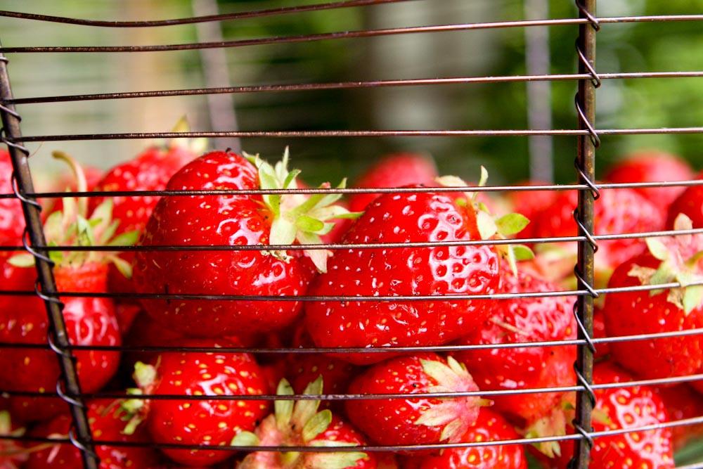 Strawberry-Salad-1-6.jpg