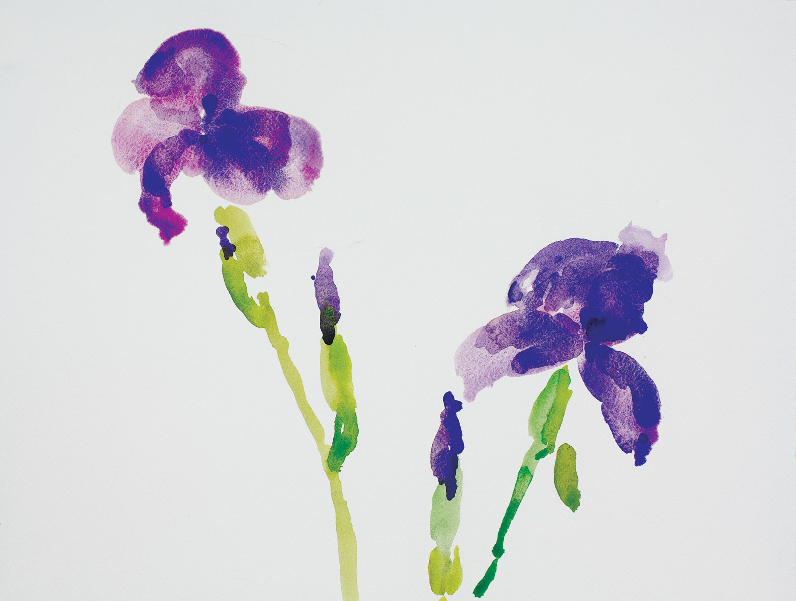 Iris-2015-12x16