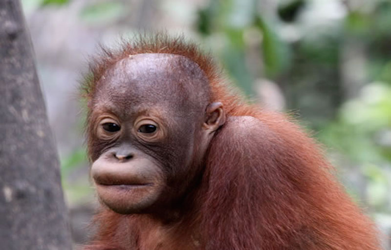 Palm oil threat