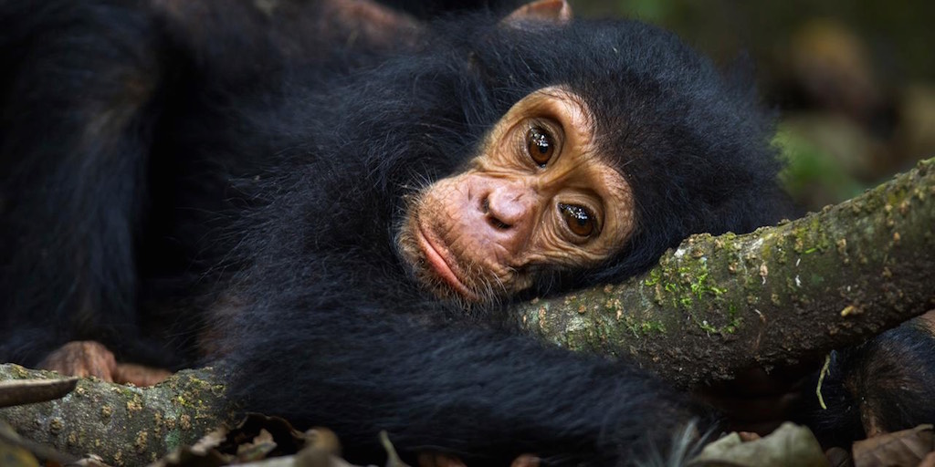 Animals may suffer from human-like depression