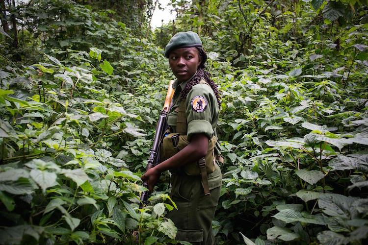 Rangers protecting gorillas