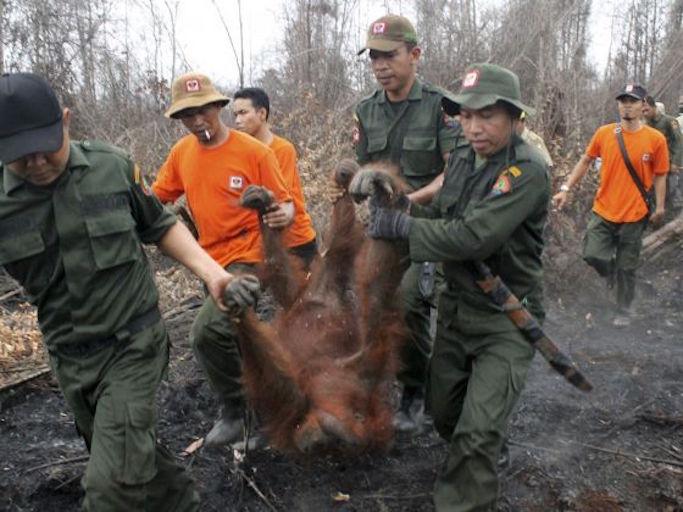 Fires destroying forsest in Indonesia.jpg