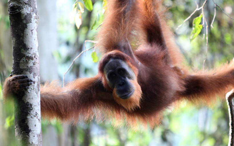 orang palm oil.jpg