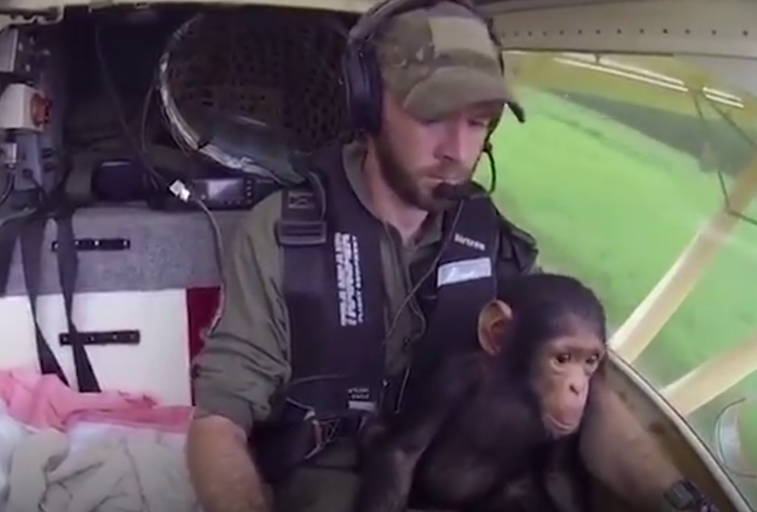 chimp helicopter.png