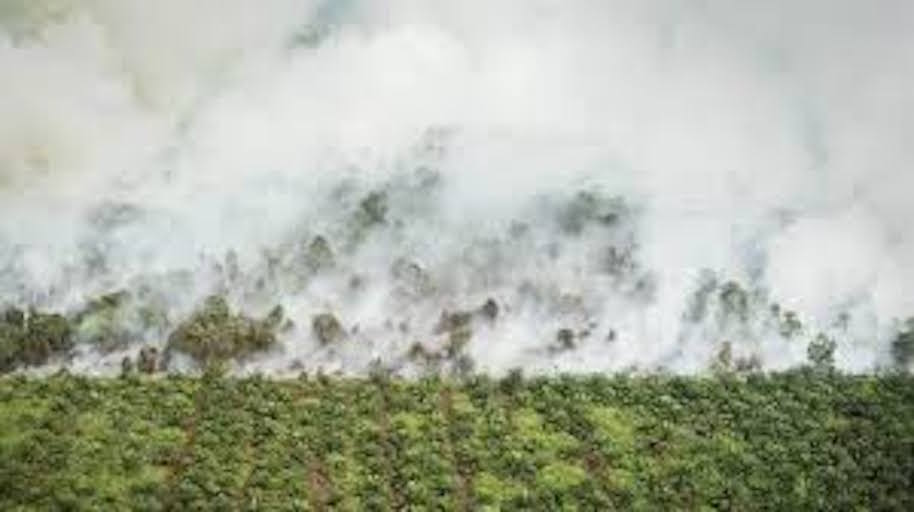 palm oil fires.jpeg