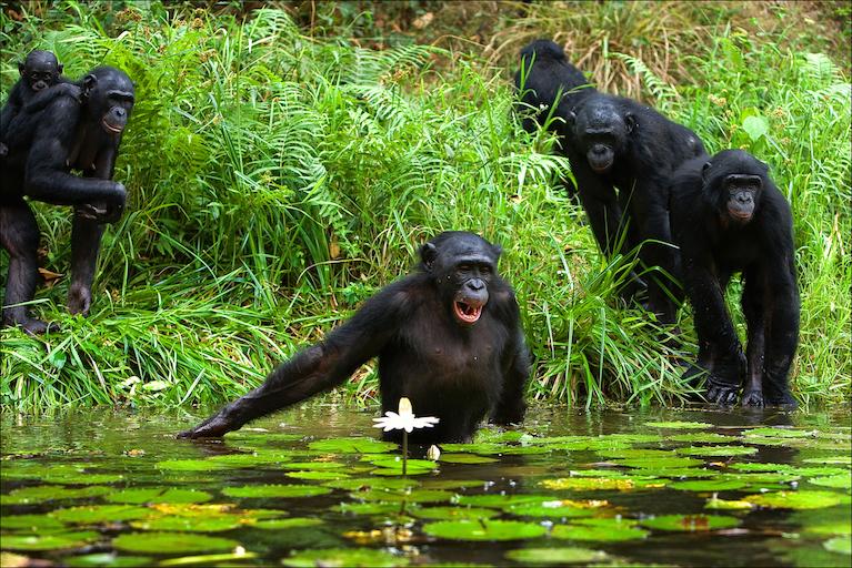 world ape fund.jpg