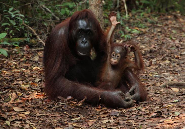 wild orangs.png