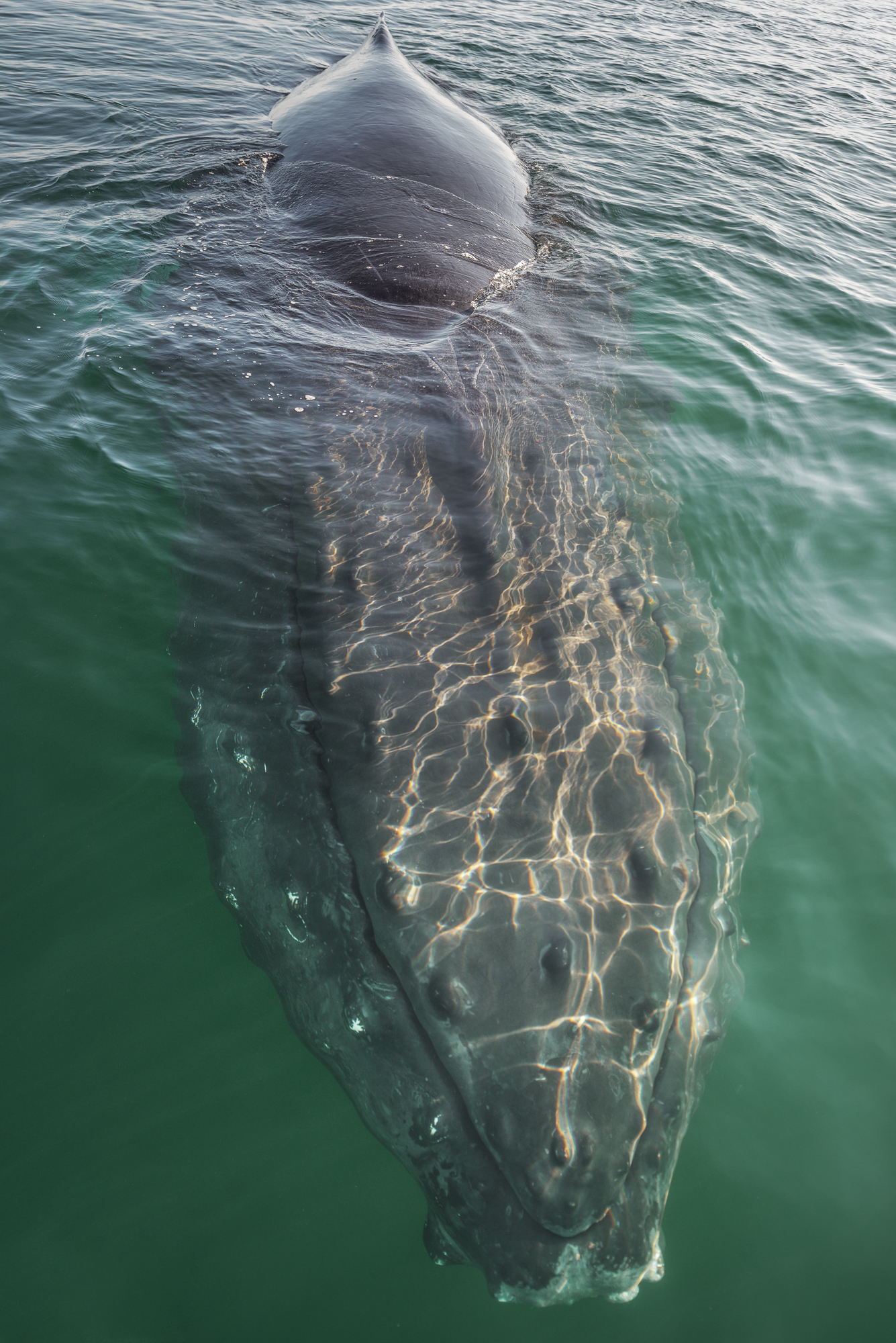 The whales were so close you could touch them. Here is a Humpback coming to say HI