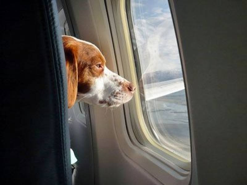 Dog on Private Jet03.jpg