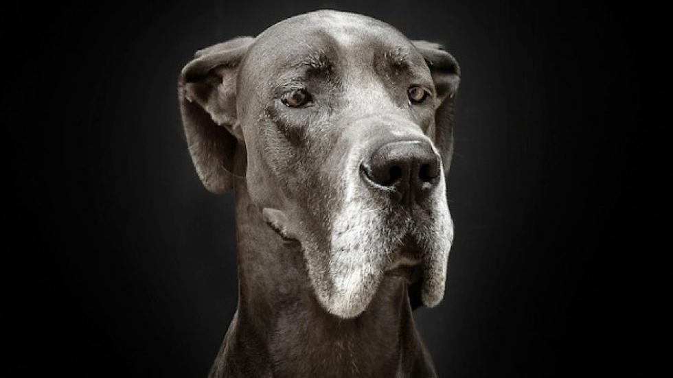 GC IMage - Senior dog.jpg