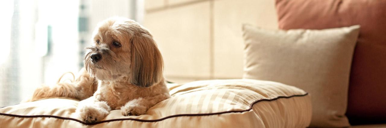 Hotel Pets 06.jpg