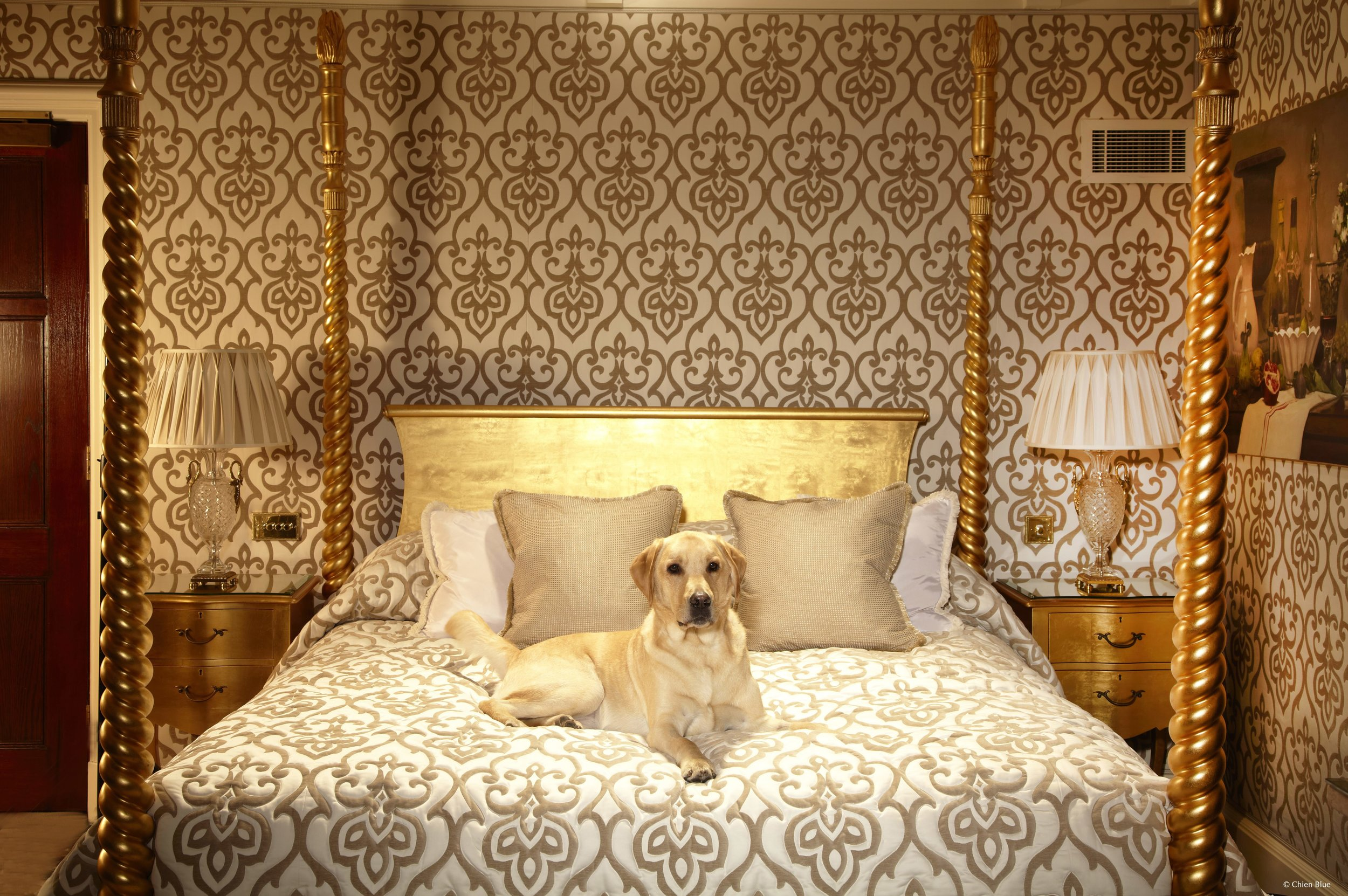 Hotel Pets18.jpg