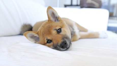 Hotel Pets01.jpg