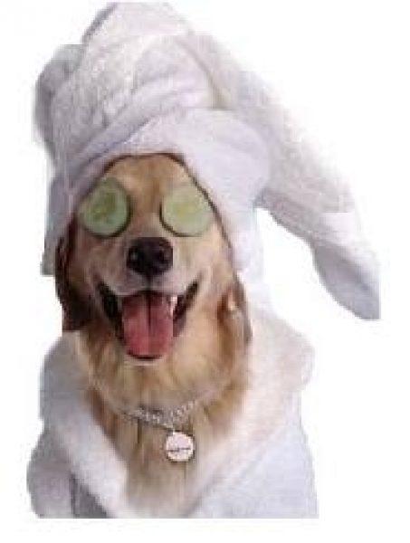 Spa Dog.jpg