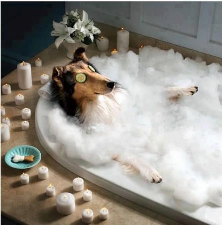Spa Dog06.jpg
