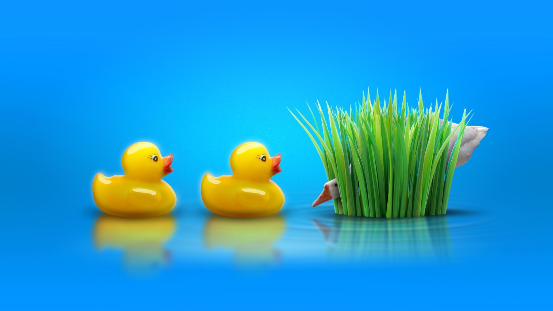 DuckDuckGoose_01.jpg