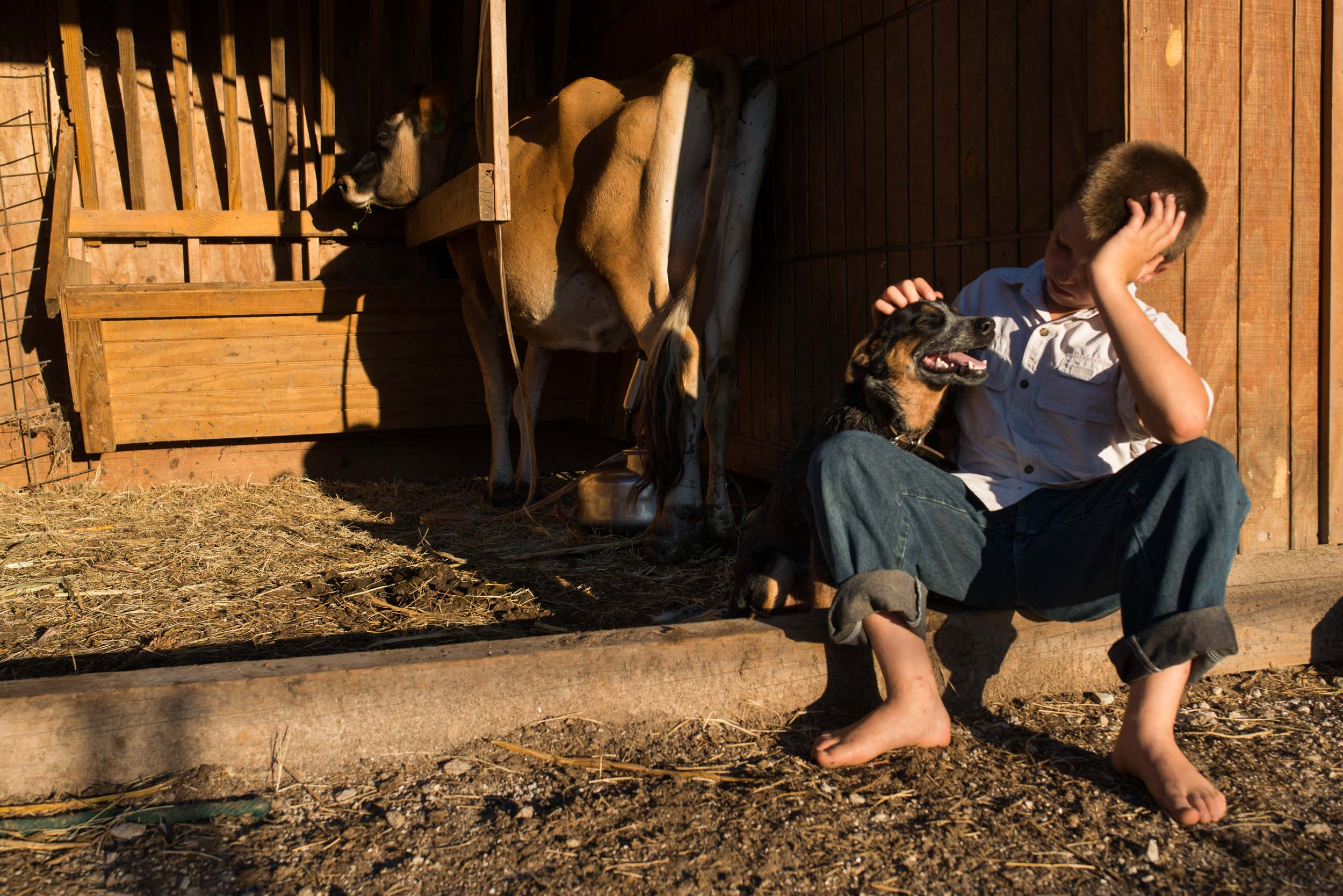 """Austin waits patiently with """"Blue,"""" his cow dog, while an automatic milking-machine pumps their milk cow in the barn. Austin has been training """"Blue"""" how to herd cattle on command."""