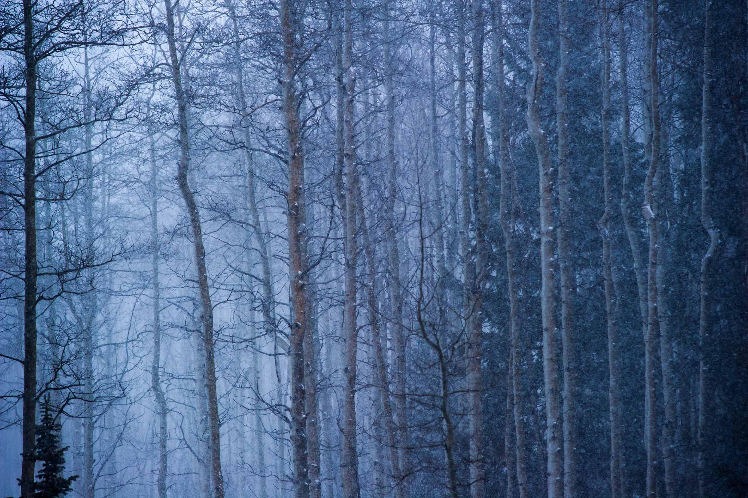 Landscape-color_007.jpg