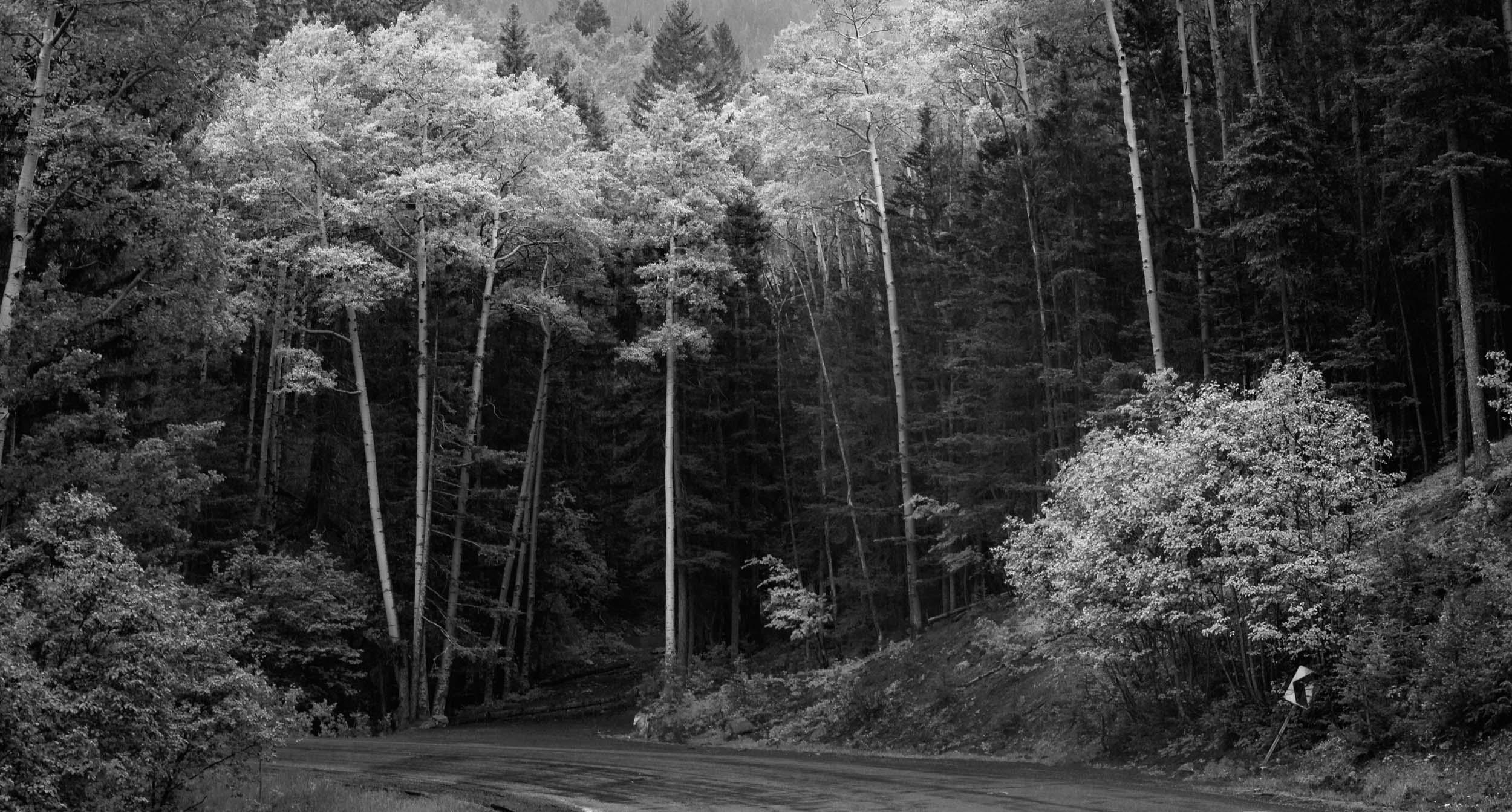 Landscape-bw_009.jpg