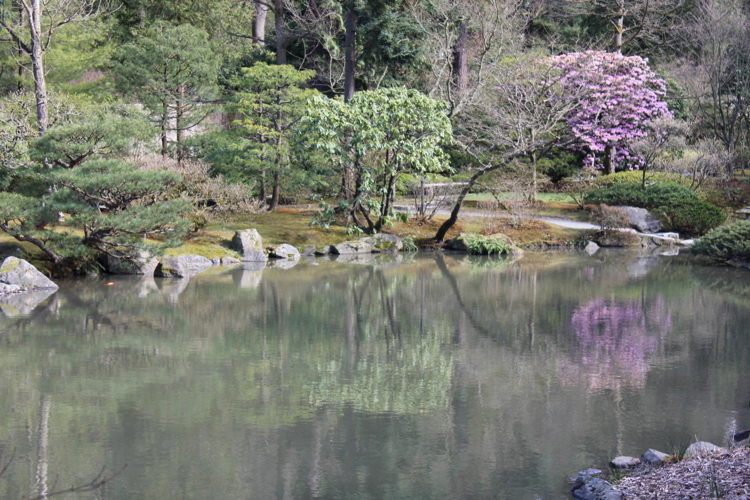 Japanese Garden Seattle by drawntocities.com