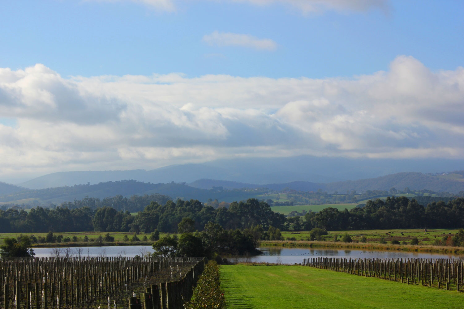 Yarra Valley by drawntocities.com