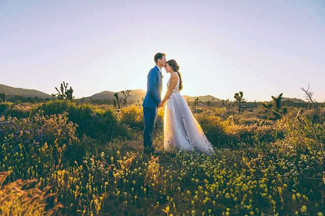 These two heavy hitters, Sam and Shey, got married last weekend in the middle of a desert super bloom. Hard to describe how perfect it was, but I was lucky enough to be there to snap a few for this all time couple. So incredibly stoked for you guys!