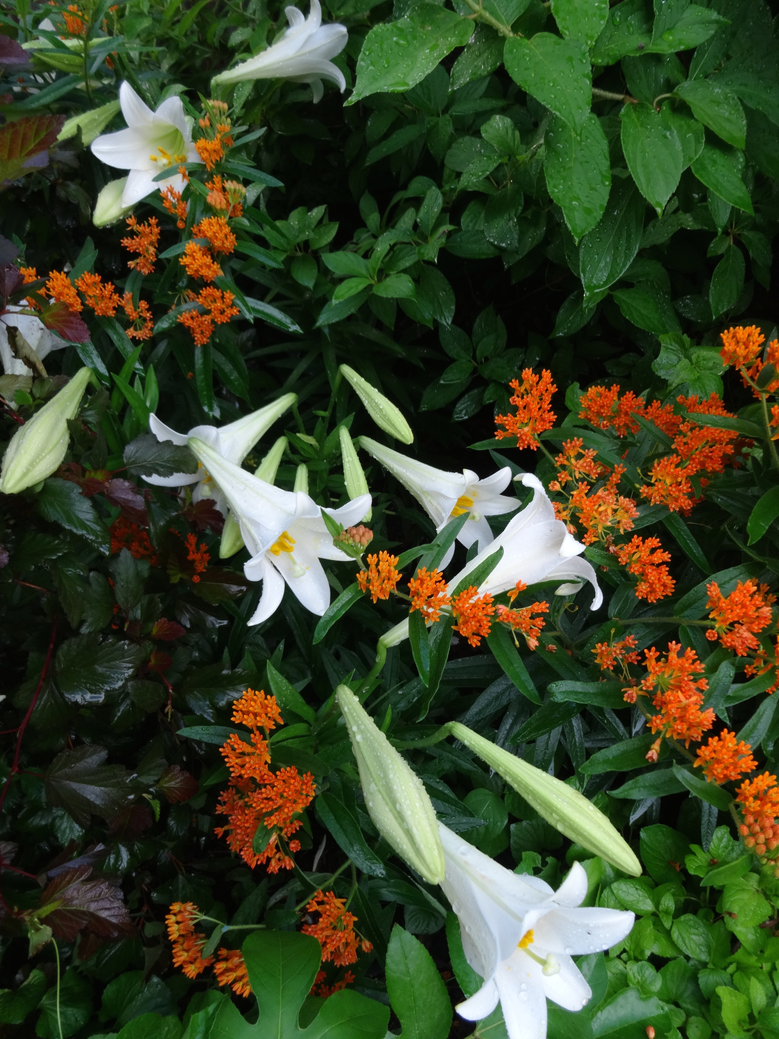 Easter lilies and butterfly weed