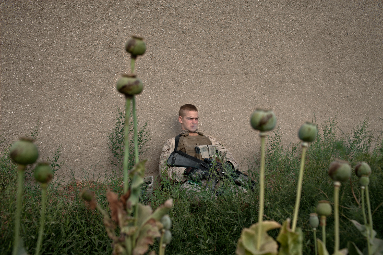 U.S. Marine Lance Corporal Nicholas Edwards stands guard over Afghan farmers harvesting opium inside Combat Operations Post Coutu in Marja District, Helmand Province, Afghanistan.