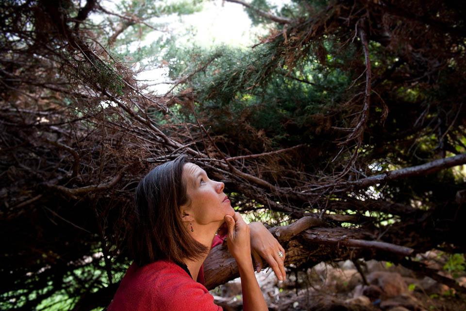 Hiding out in an evergreen den near home