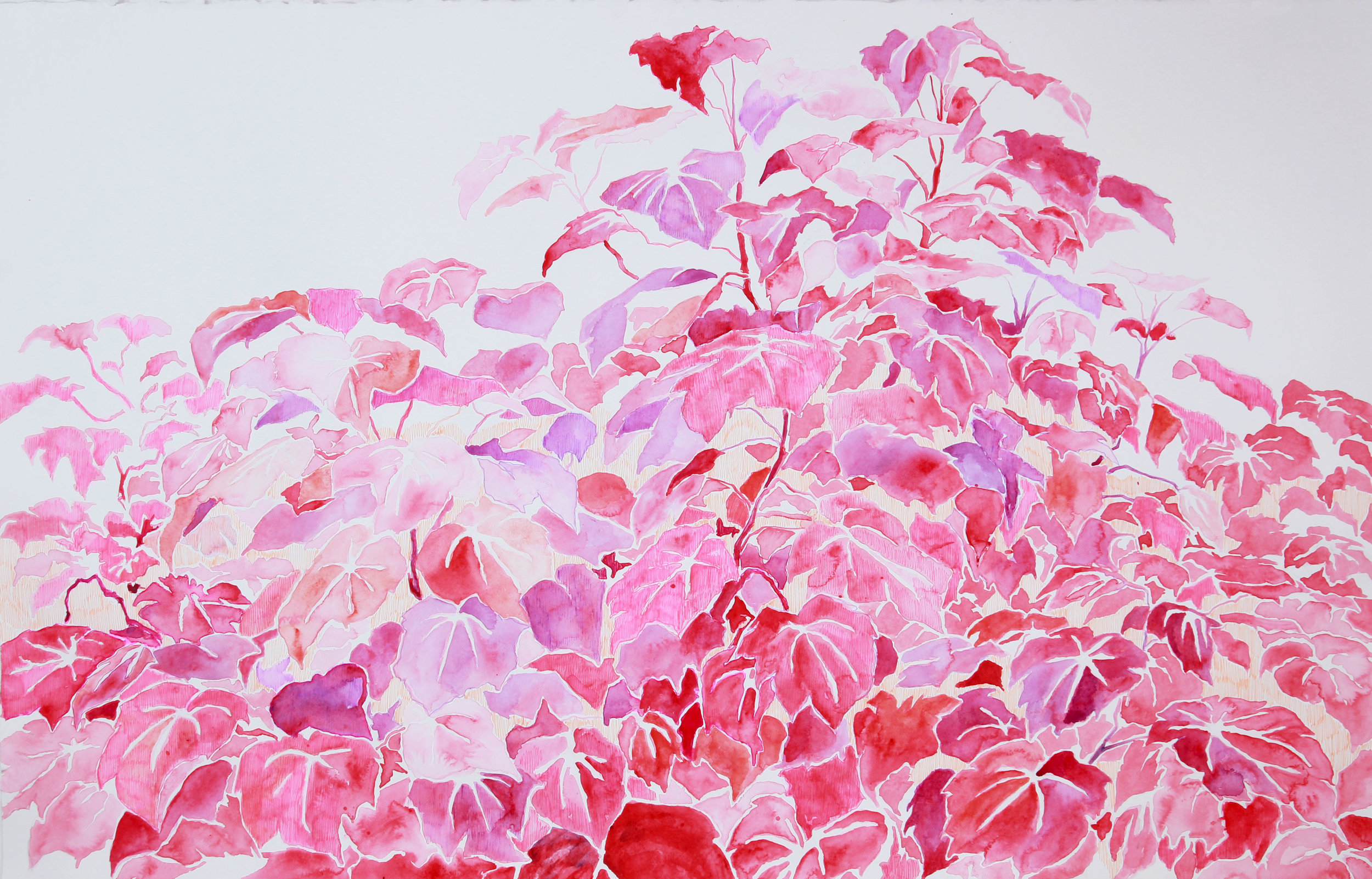 untitled (ivy in reds)