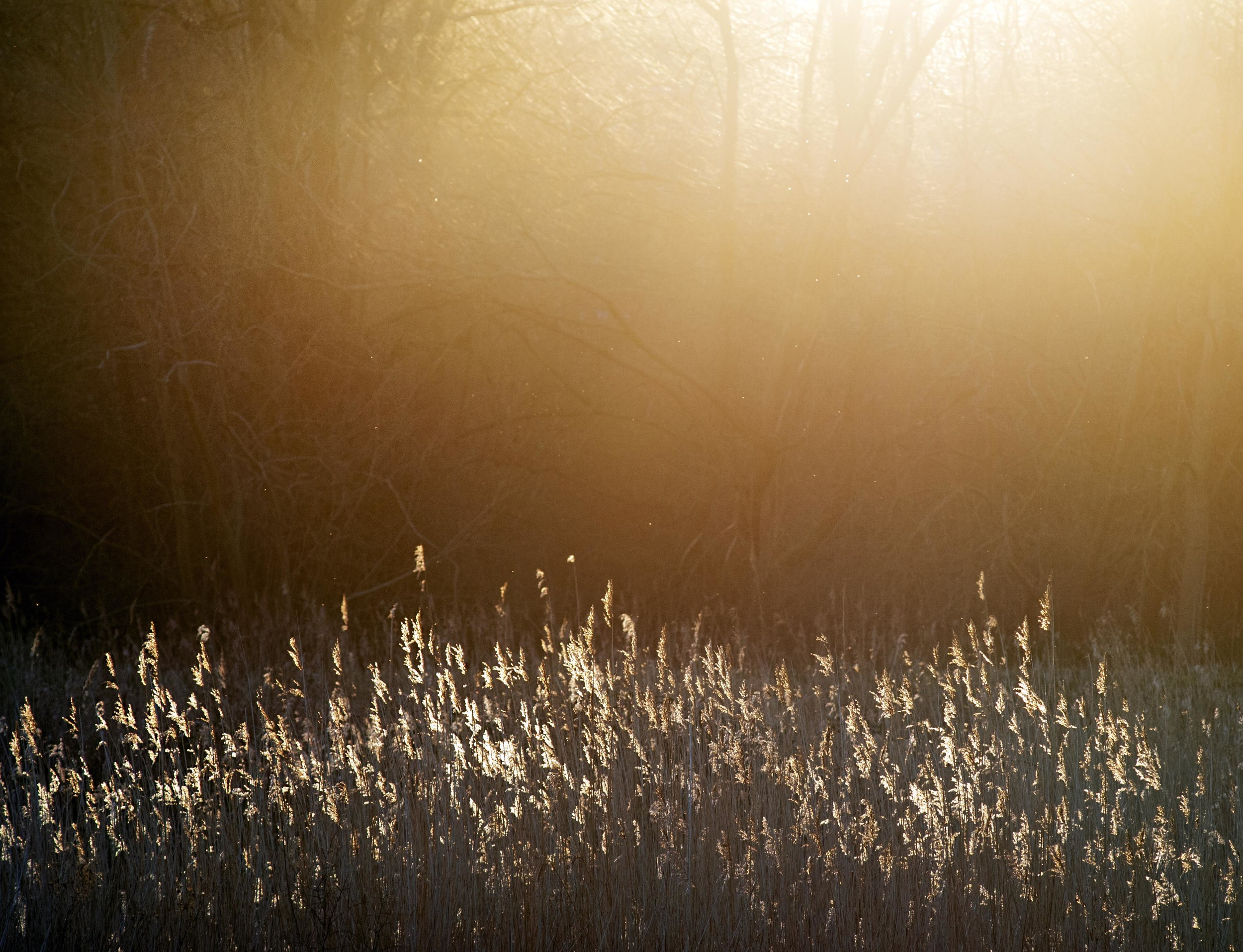 Sun coming through trees in heart of reeds for web.jpg