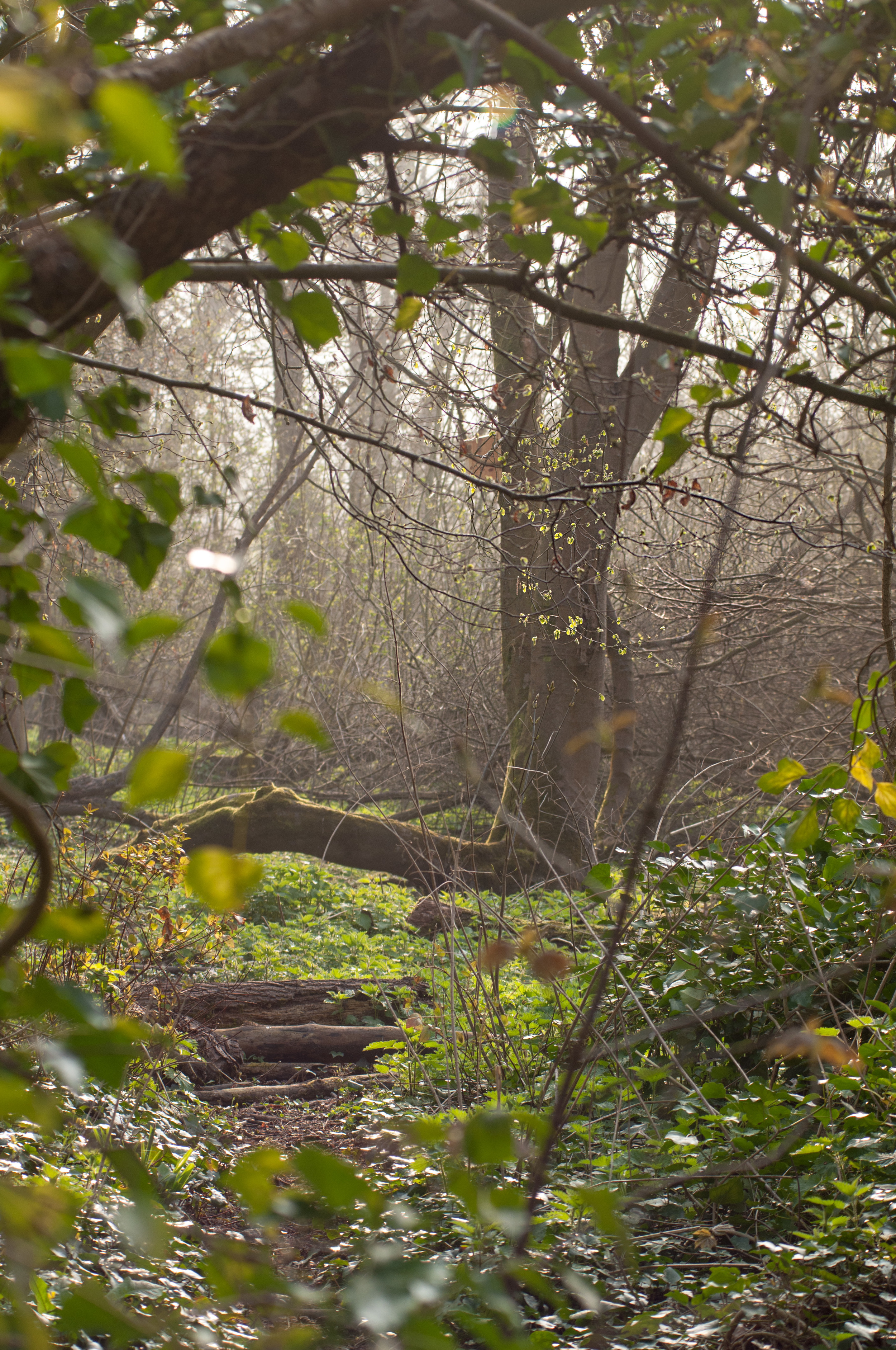 Railwayland in Lewes, Spring Woodland.jpg