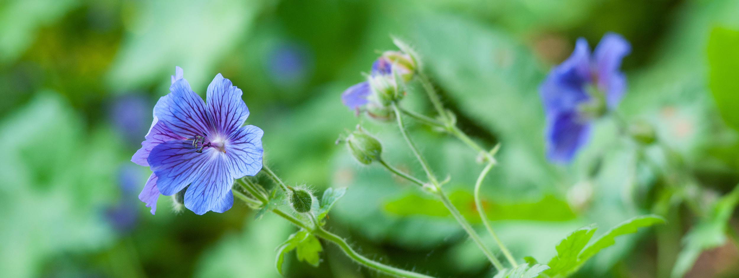 _DSC4120 blue flowers for web.jpg