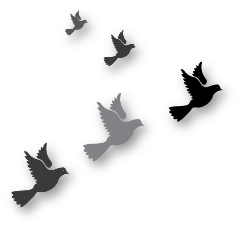 Graphic of birds flying.png