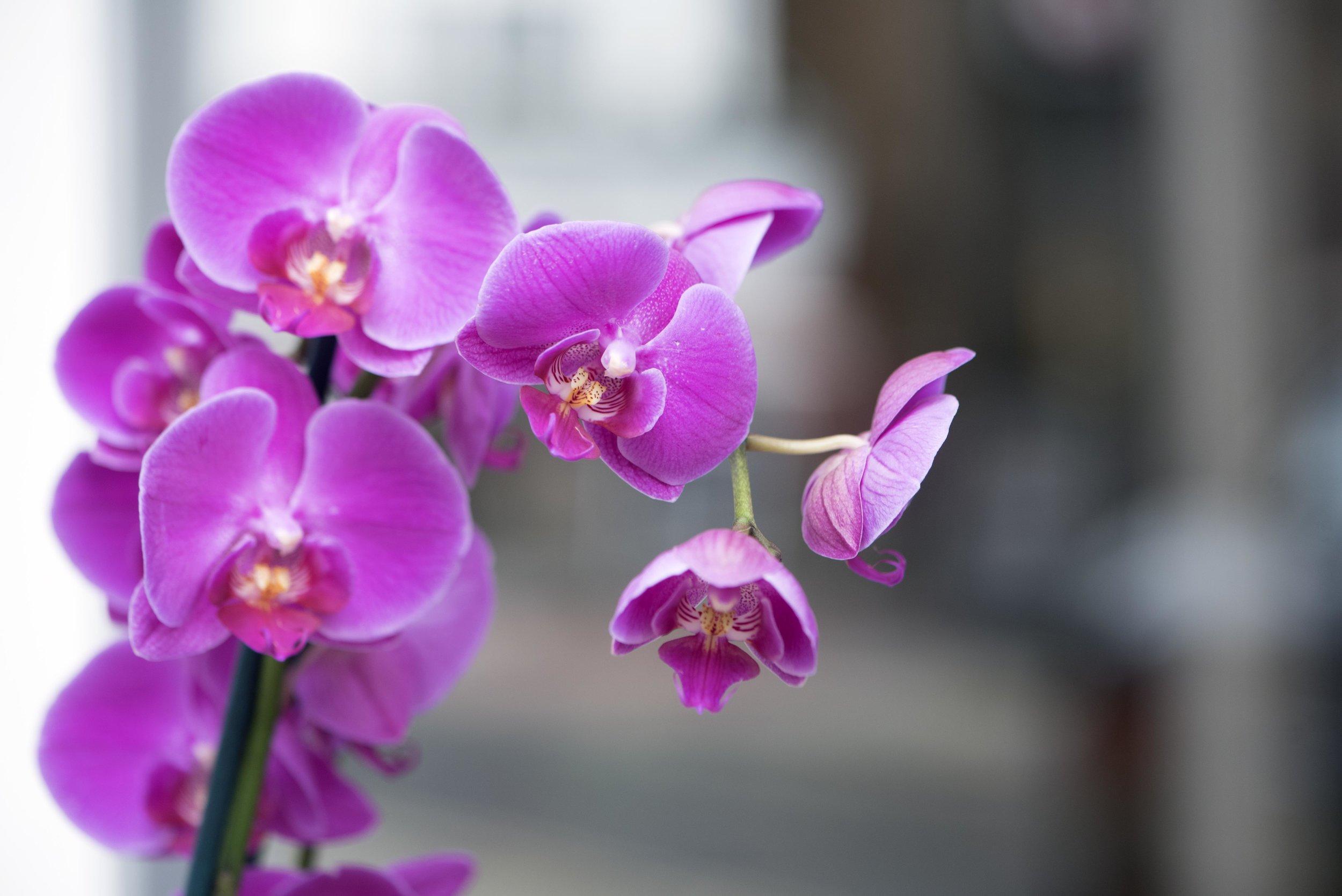 Purple Orchids 3.jpg