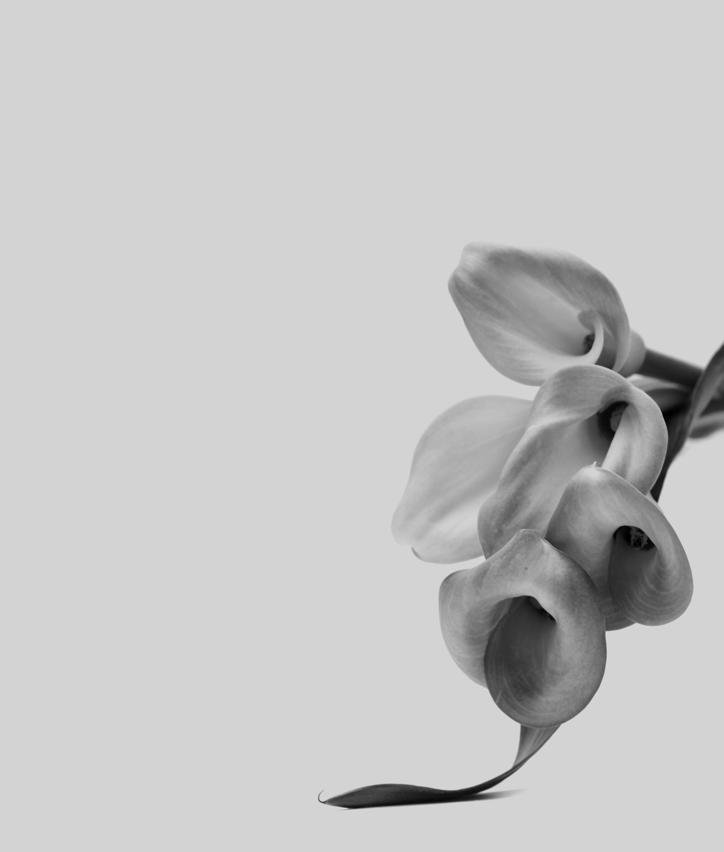 flower_hires.jpg