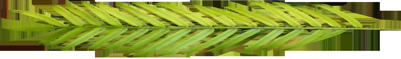 palm_leaf_full_03.png