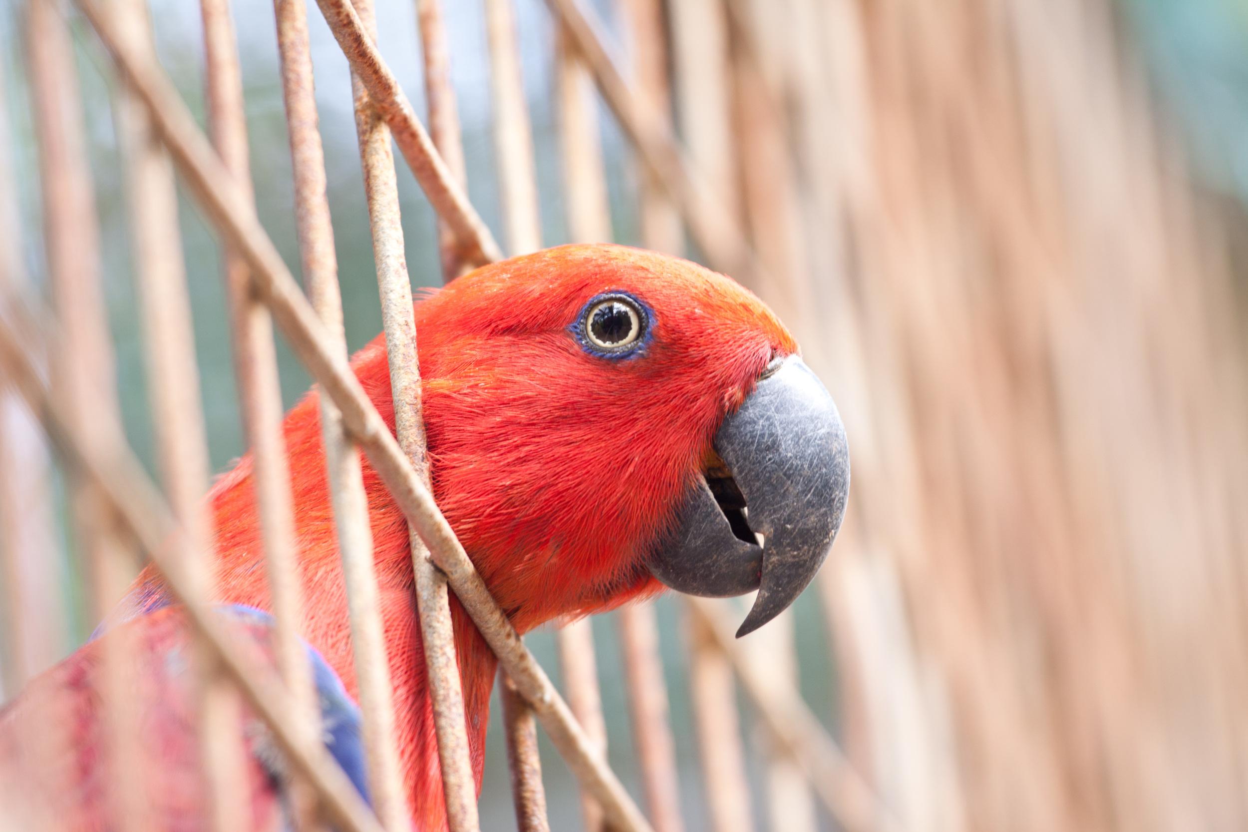 New Guinea_SS-2.jpg